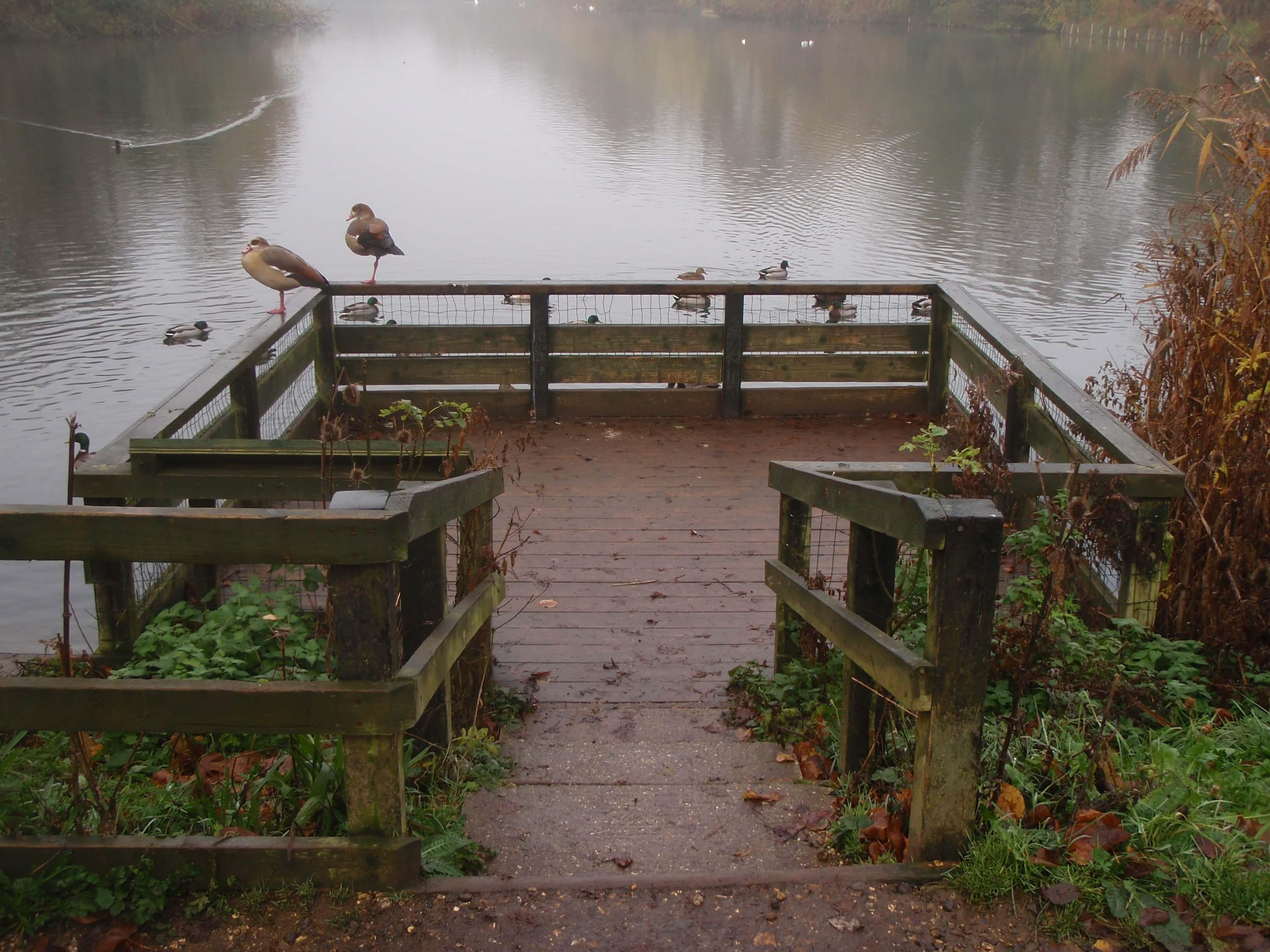 Duck Feeding Platform